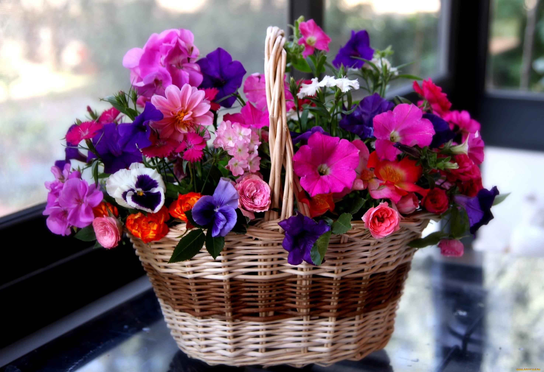 опасность поздравления о семенах цветов колесах